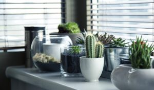 décoration naturelle dans votre habitation